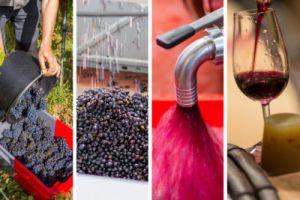composition rythme du vin